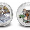 2014 Canadian Pintail Duck Coins in Silver and Color