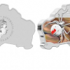 2015 Australian Map Shaped Silver Coin Features Redback Spider